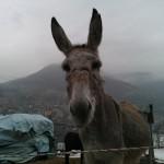 Foto scattata con HTC Titan