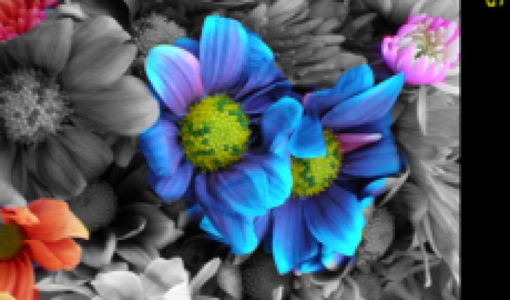 Colorify