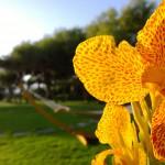 Foto scattata con Lumia 1020 e Nokia Pro Camera